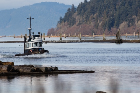 Iona Beach is at the end of the northernmost arm of the Fraser. Logs are boomed here for transport all around the region.
