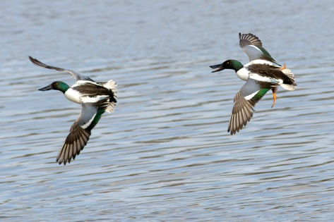 The shovelers were getting a bit aggro with each other.