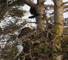 Three bird species in this shot!