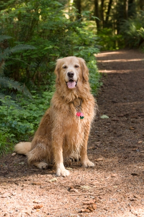 Maggie was our faithful, slightly insanne companion for the hike.