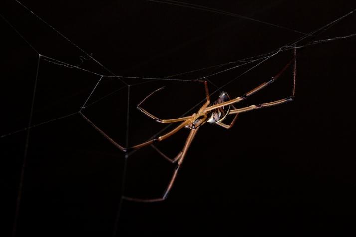 widow male